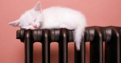 Котик и батарея